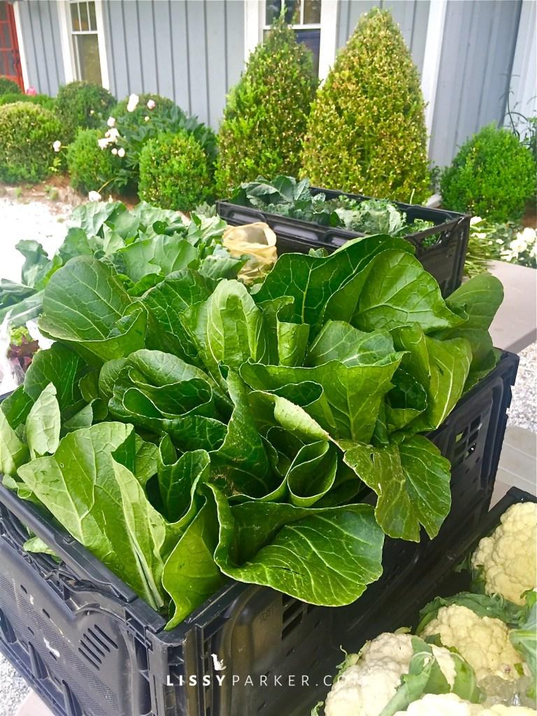 fresh salad greens