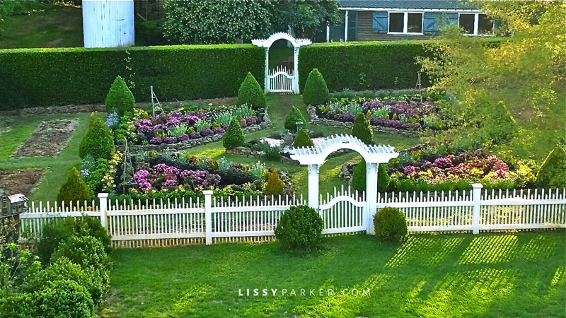 Boxwood garden in a holly hedge with white picket fence
