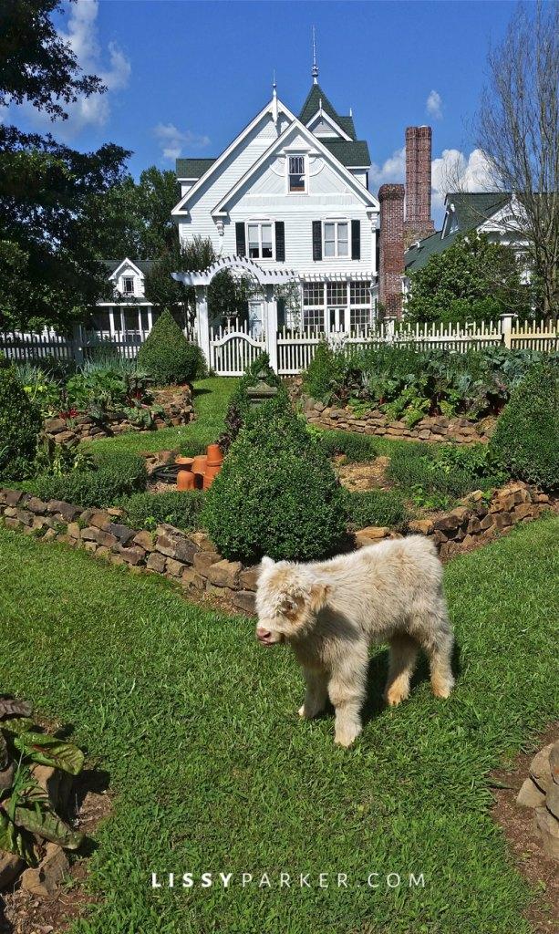 Baby Calf in the vegetable garden