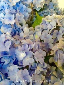 close-up of blue hydrangea