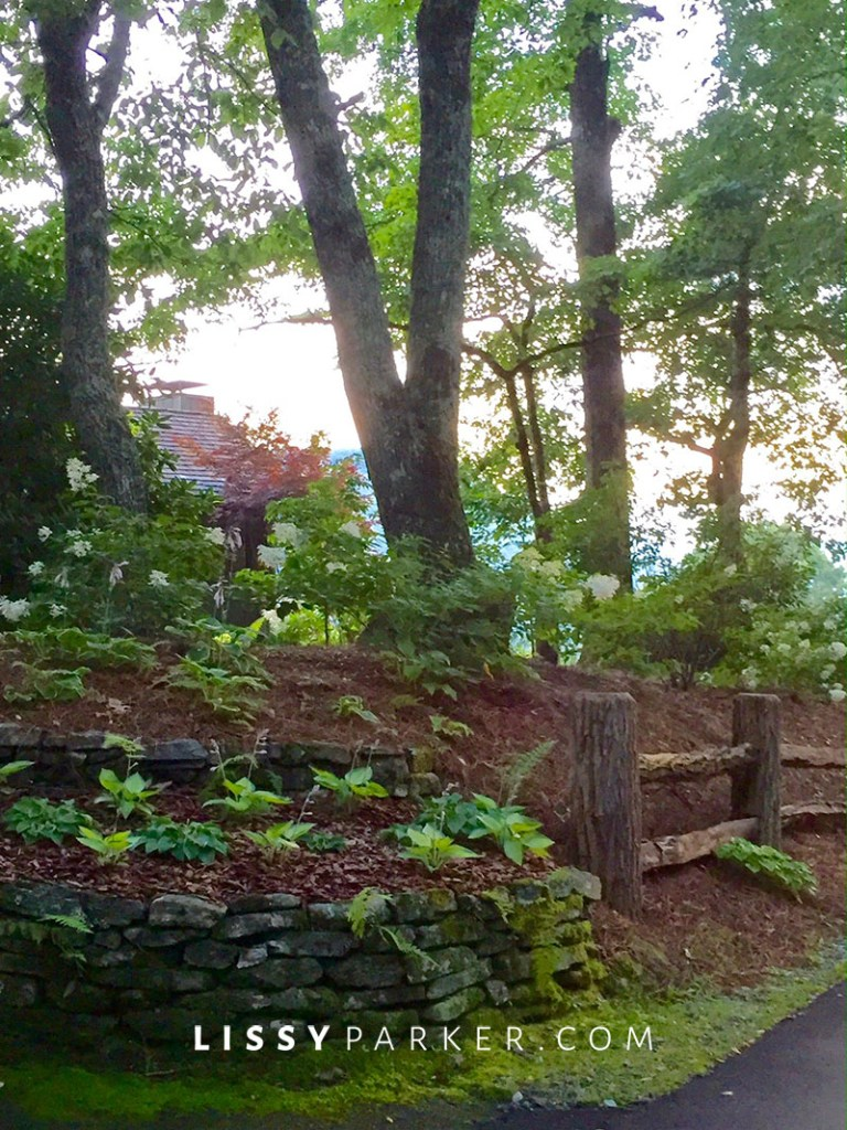 hydrangea, boswood and hostas line the drive