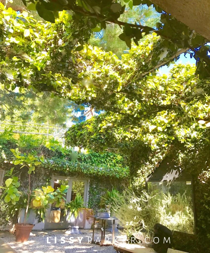 garden in courtyard