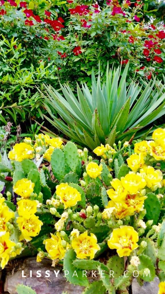 succelent garden