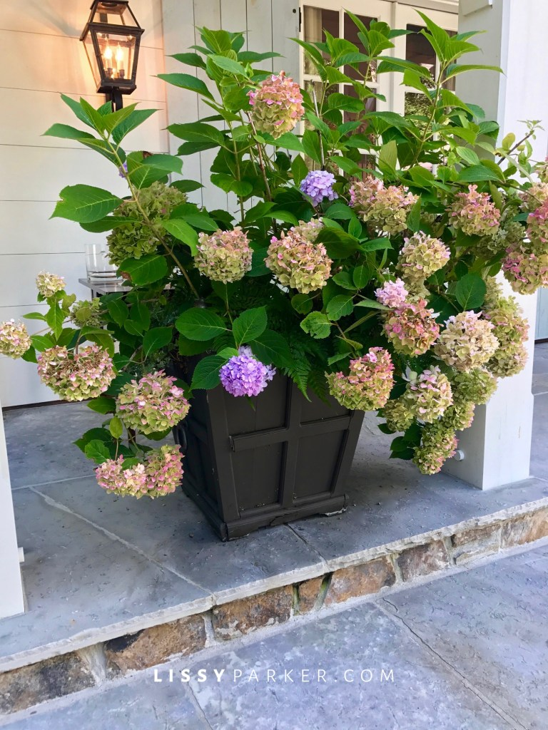 hydrangea containers