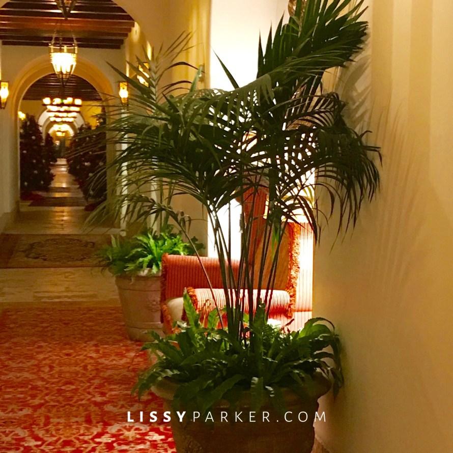 palm planters