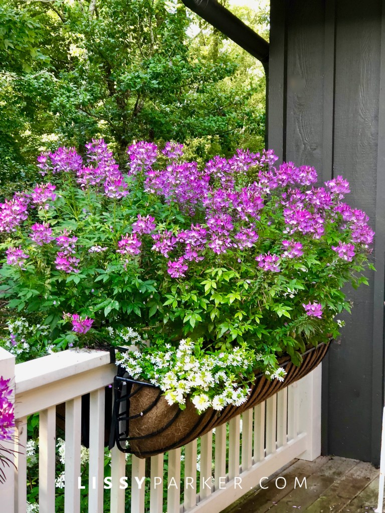 pink porch and flowers