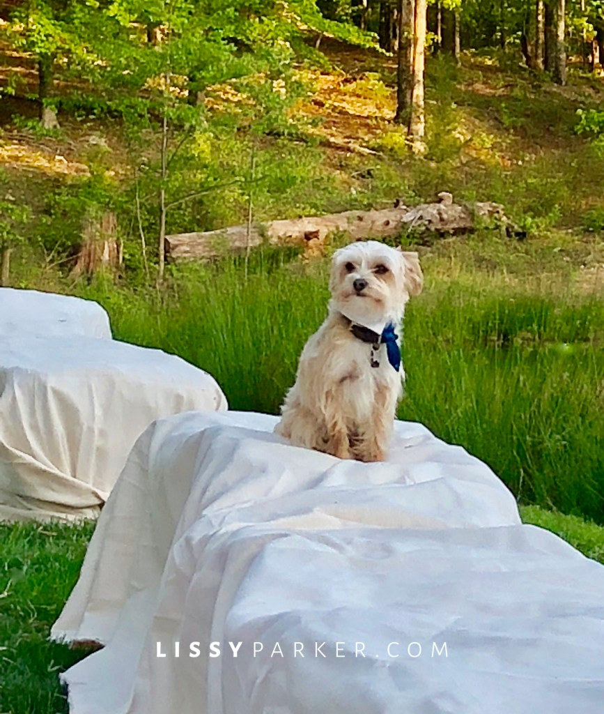 puppy at the wedding