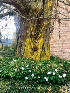 Provence tree from Jenny