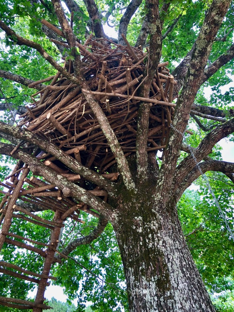 Gala's nest