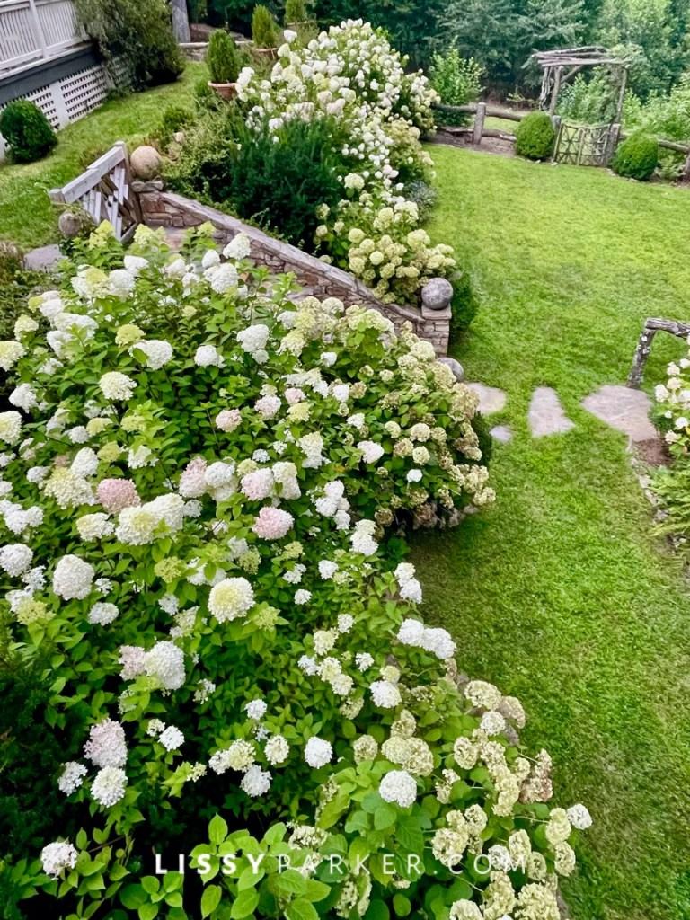Hydrangea heaven