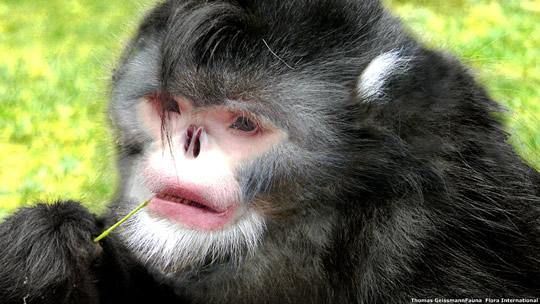 Macaco Michael J