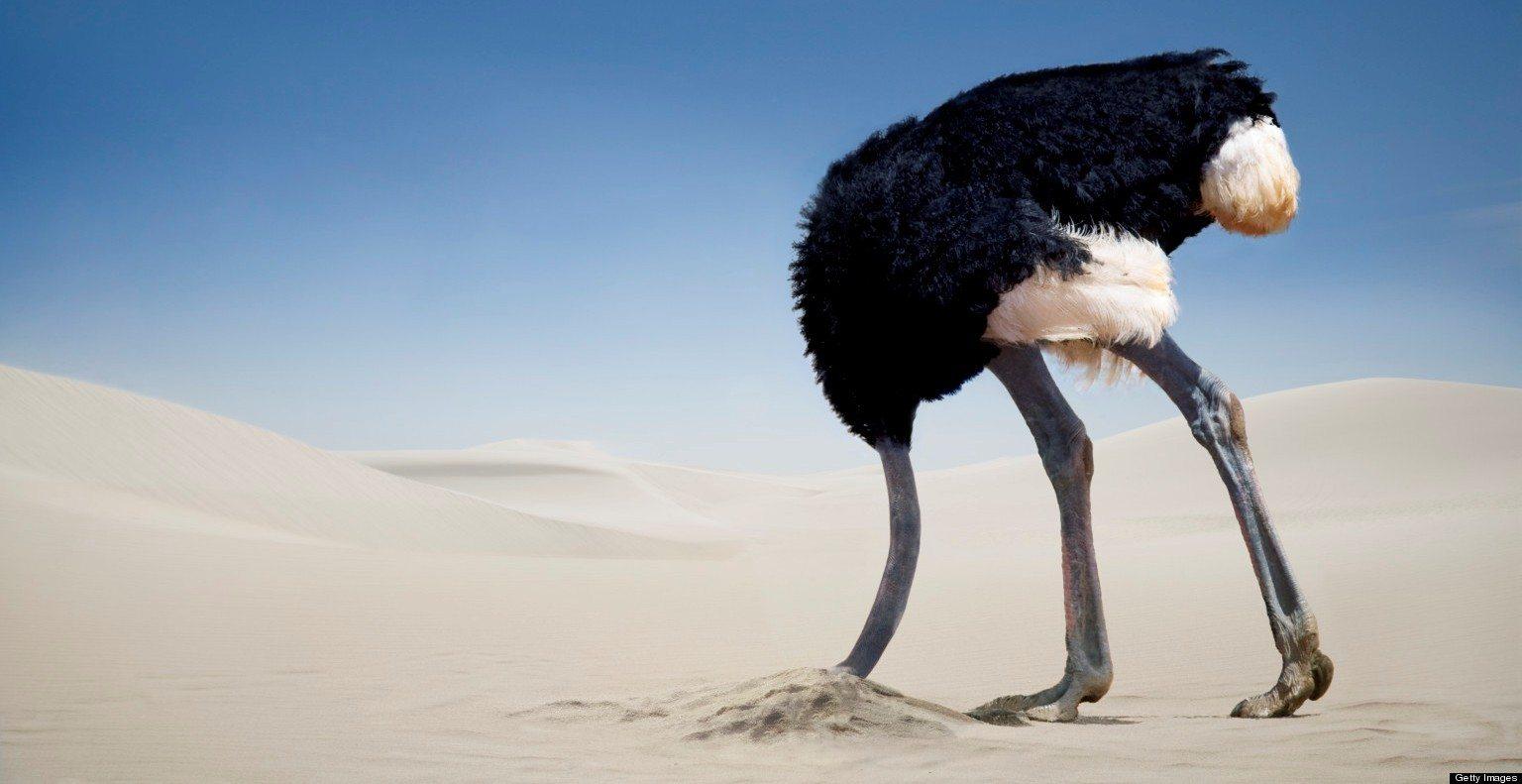 """Résultat de recherche d'images pour """"autruche tête sable"""""""