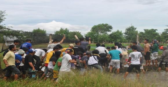Pacíficos activistas haciendo sentirse incómodos a los investigadores del arroz dorado.