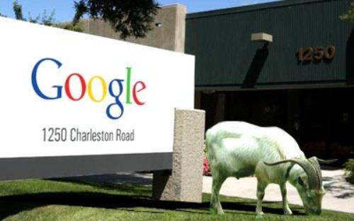 Google Hires Goat Flocks To Chew Away Grass