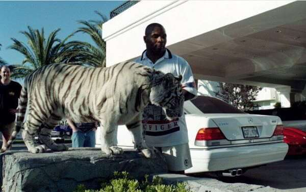 Mike Tyson'sBengal Tigers