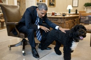 Presidential dogs: Barack Obama and Bo