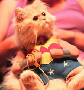 20 Adorable Cats Dressed as Superheroes: Wonder Woman