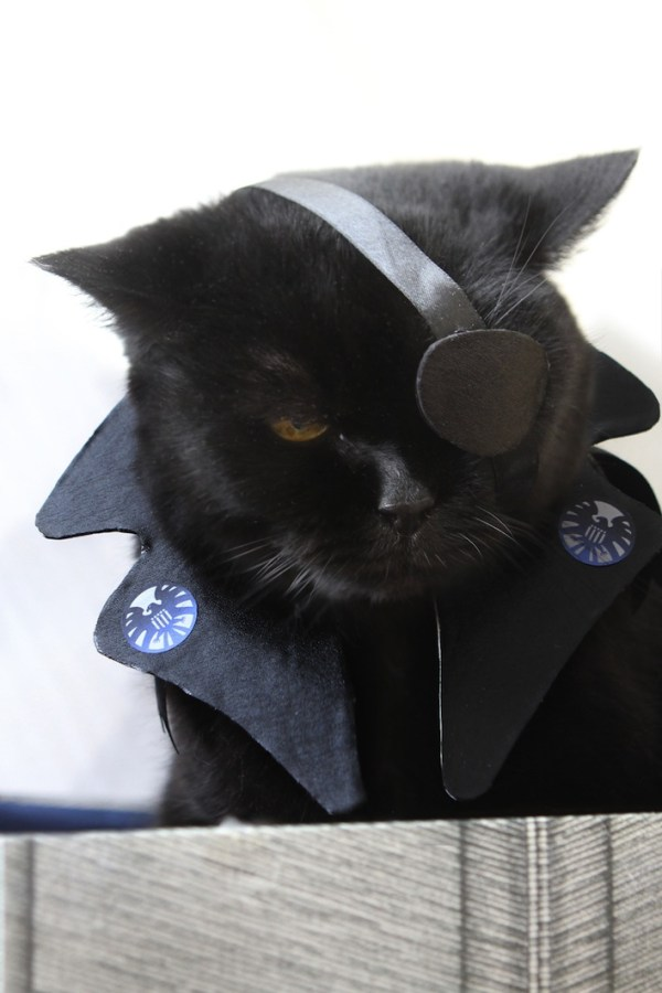 20 Adorable Cats Dressed as Superheroes: Nick Fury