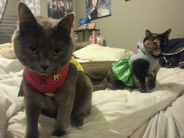20 Adorable Cats Dressed as Superheroes: Robin