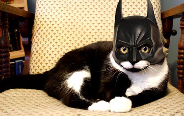 Cat dressed like batman