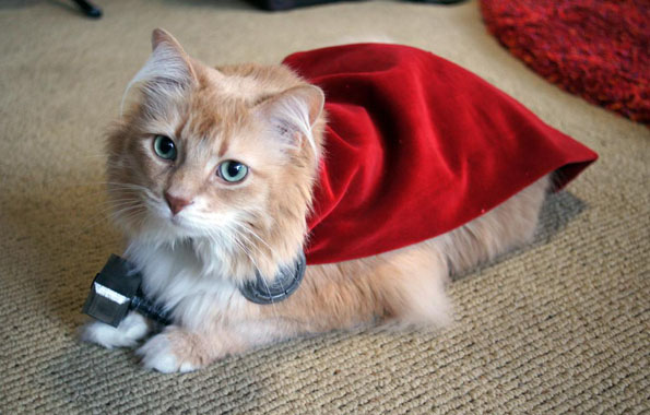 20 Adorable Cats Dressed as Superheroes: Thor