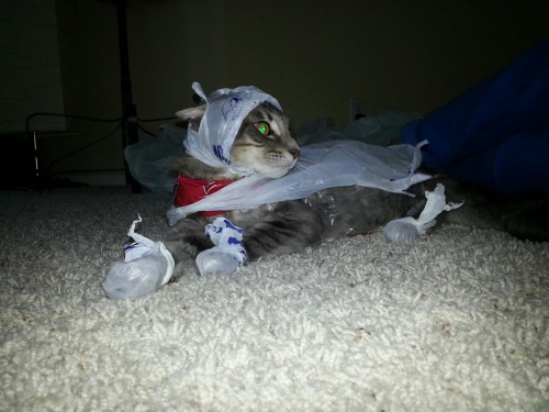 20 Adorable Cats Dressed as Superheroes: