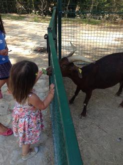 Mini Zoo - Jardin d'Acclimatation