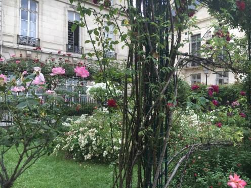 Roseiras do jardim Saint-Gilles Grand Veneur