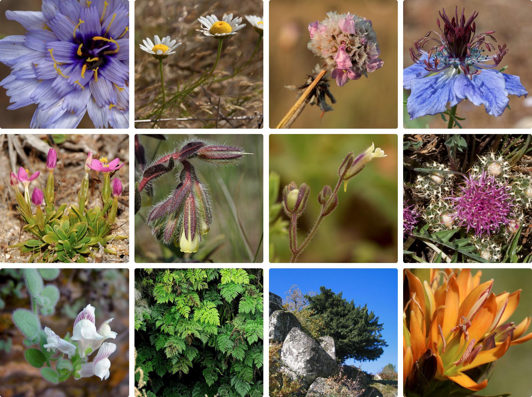Há 12 novas plantas para apadrinhar