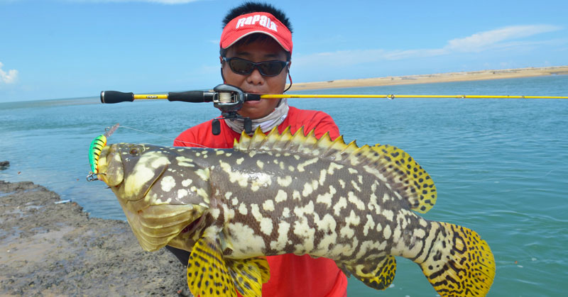 Strangest-Fish-Queensland-Grouper