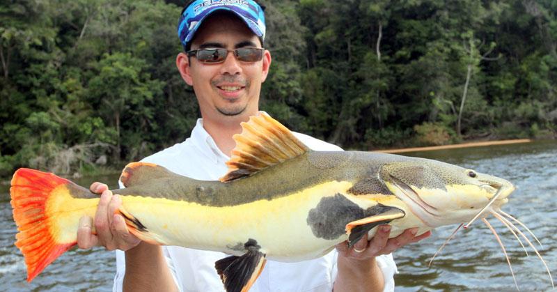 Strangest-Fish-Redtail-Fish