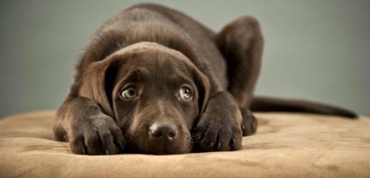 Cabinet veterinar Valu: Tratamente eficiente pentru reducerea starilor de anxietate la caini, pisici si pasari de apartament