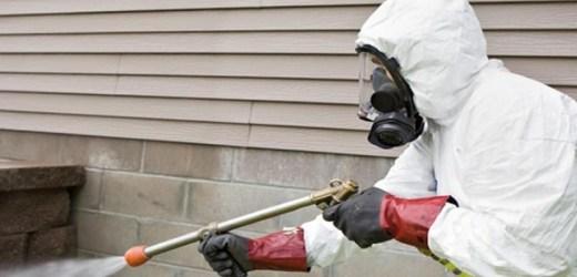 Firma DDD – deratizare, dezinsectie si dezinfectie: rapid si eficient