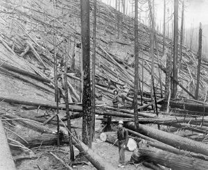 Burned Idaho forest in 1910