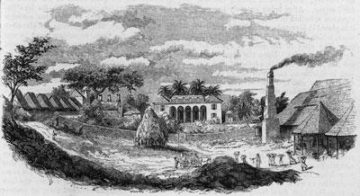 Cuban sugar plantation