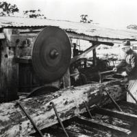 Mr Wilson at the timber mill, driving a wedge into a log, 1940s.