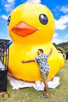 Duckin' Around