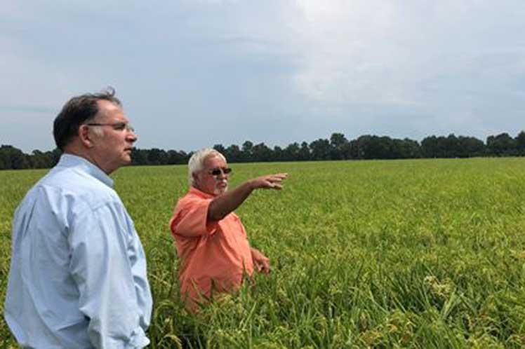 Reintroducen en EE.UU. proyecto para ampliar ventas agrícolas a Cuba