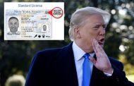 Trump presiona contra las licencias de conducir para indocumentados en Nueva York