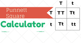 free-punnett-square-calculator