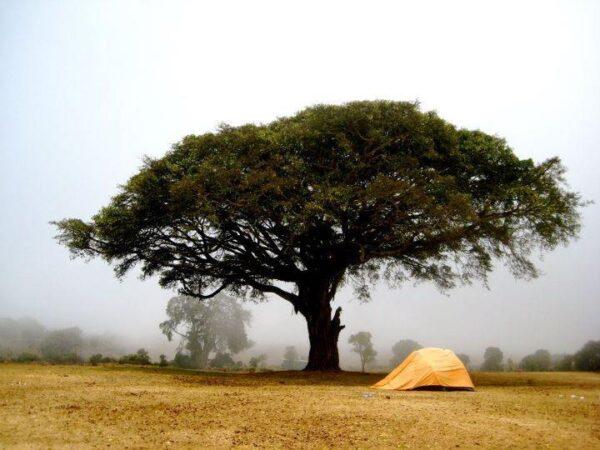 Ngorongoro Crater in Northern Tanzania