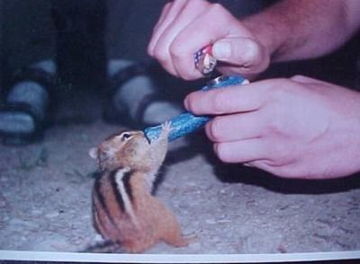 Squirrelpotds6