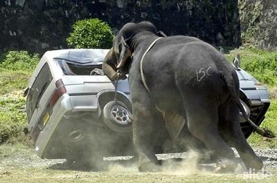 Elephant-1
