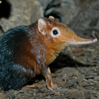 10-coolest-little-critters-named-after-big-ones