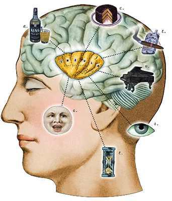 Braininsula