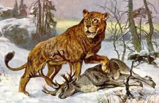 Cave-Lion