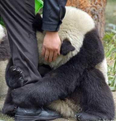 Cute-Panda-Hug-Earthquake