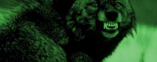 Wolf1-500X200