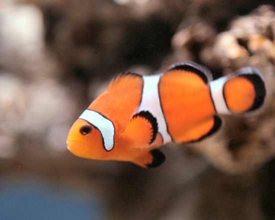 Keegan Allen Fish