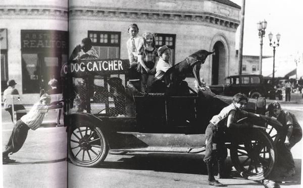 Dog-Catcher